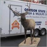 Robotic Elk